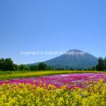 羊蹄山 (倶知安町) 6/05/17 ※