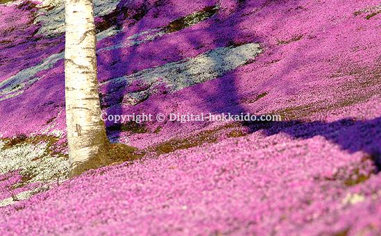 大空町   北海道各地の写真   北海道の風景写真3000点以上 ...