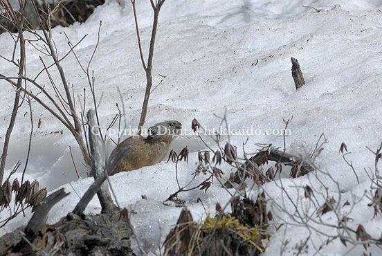 鹿追町 – 北海道の風景写真3000点以上、デジタル北海道