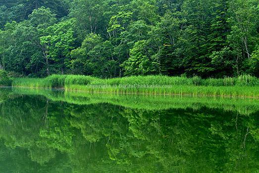 利尻島・利尻富士町 – 北海道の風景写真3000点以上、デジタル ...