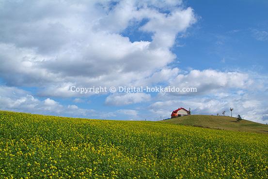 大空町 – 北海道の風景写真3000点以上、デジタル北海道